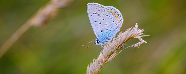 environnement et biodiversite